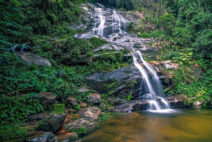 Floresta-da-Tijuca