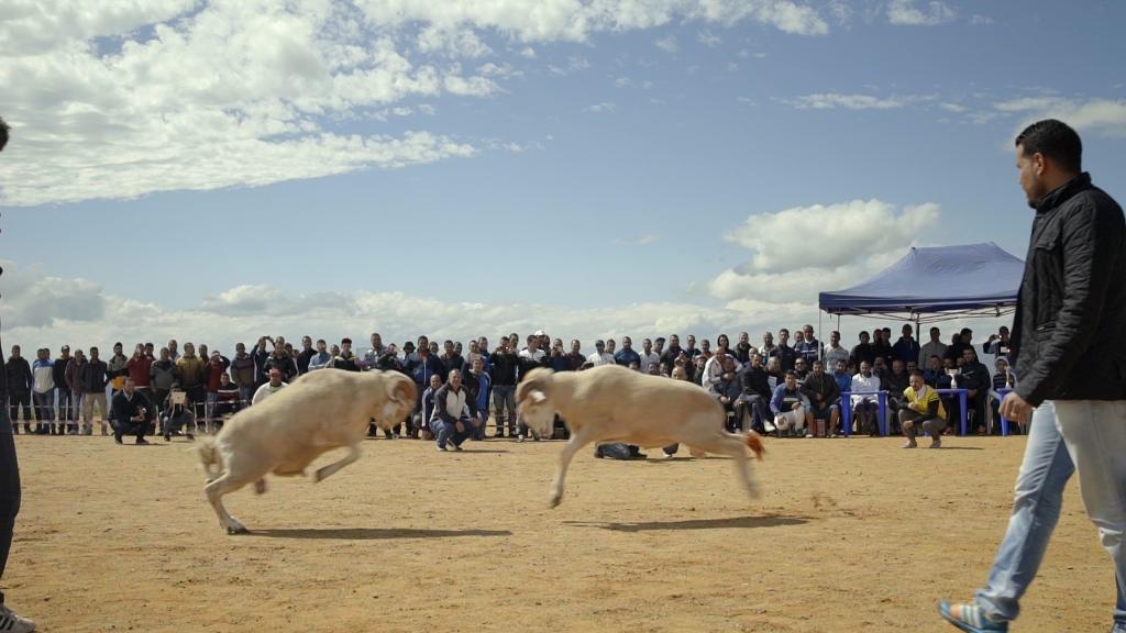 """Filme """"Sobre ovelhas e homens"""", de Karim Sayad. Foto: Divulgação"""