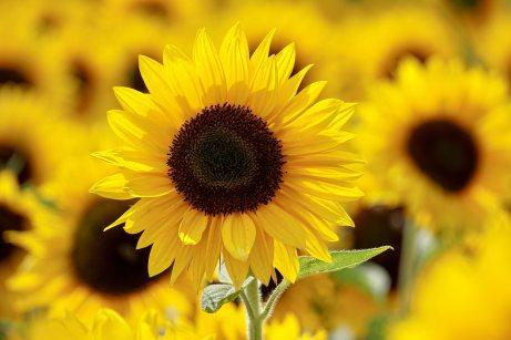 beautiful-bloom-blooming-1169084